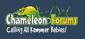 Chameleon-Forums-Kammer-babies-300
