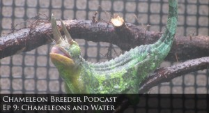 Chameleons and water