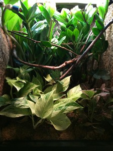 Carpet Chameleon Vivarium