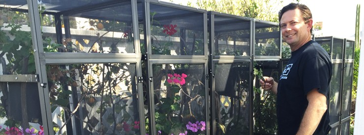 Outdoor Chameleon Cages