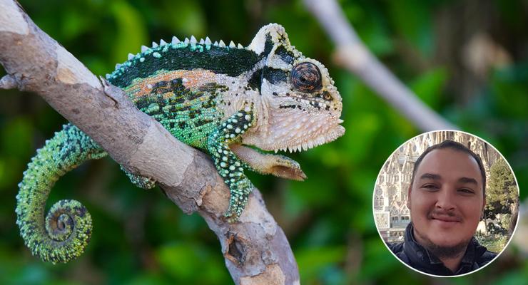Bradypodion Dwarf Chameleon