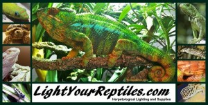 Lightyourreptiles.com logo