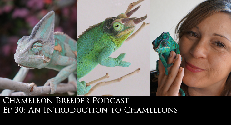 Introduction to Chameleons