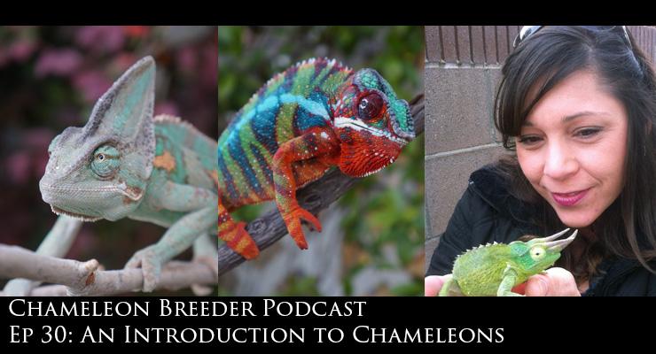 Intro to Chameleons