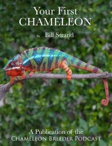 Your First Chameleon