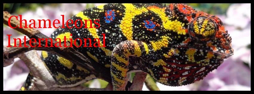 Chameleons International