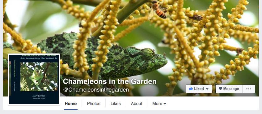 Chameleons in the garden