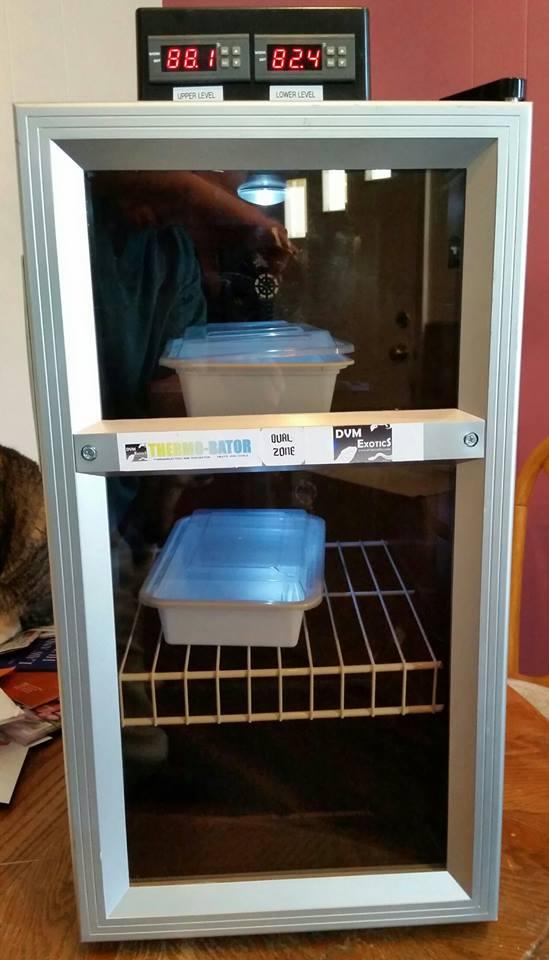 heating/cooling chameleon incubator