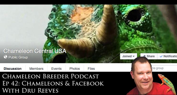Chameleons & Facebook