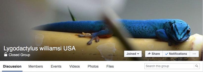 gecko facebook