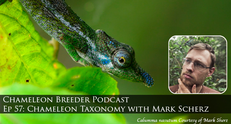 Chameleon Taxonomy