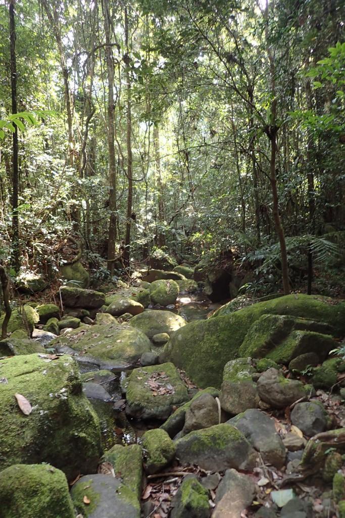 Calumma Chameleon habitat