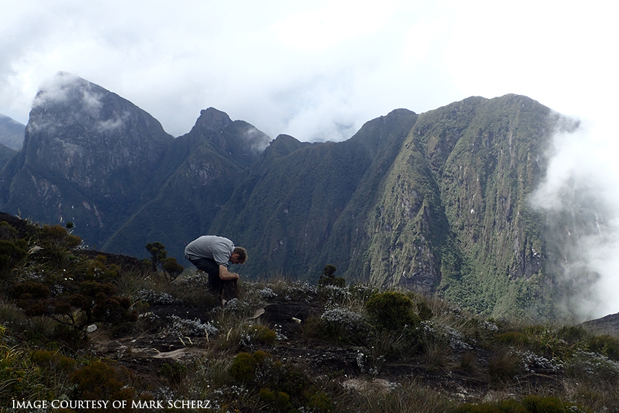 Miguel searches for skinks and other animals a few metres below the peak of Marojejy
