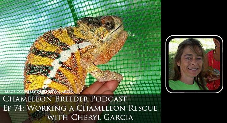 Chameleon Rescue