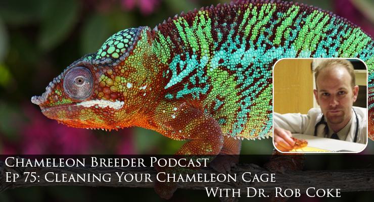 Chameleon Breeder app