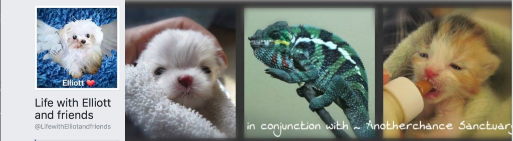 Life with Elliot Chameleon Rescue page