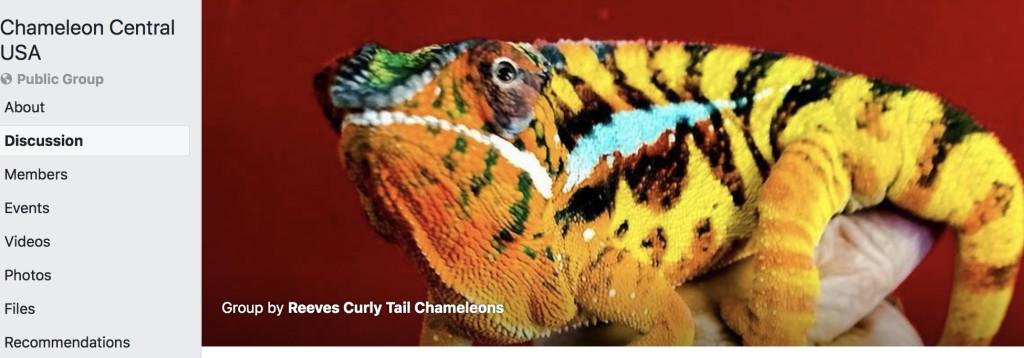 Chameleon Central USA
