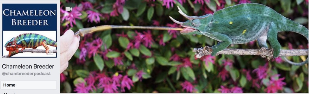 Chameleon Breeder vFacebook
