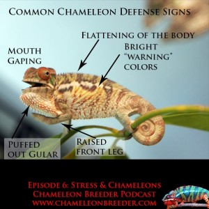 Chameleons and stress podcast episode 6