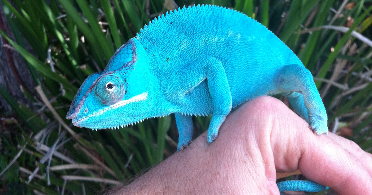 Chameleon personality what is a Borderline Personality
