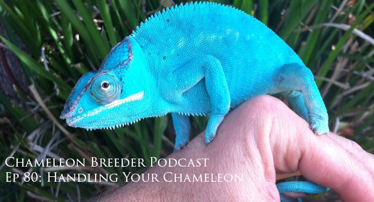 Handling Your Chameleon