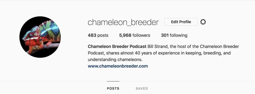 Chameleon Breeder Instagram