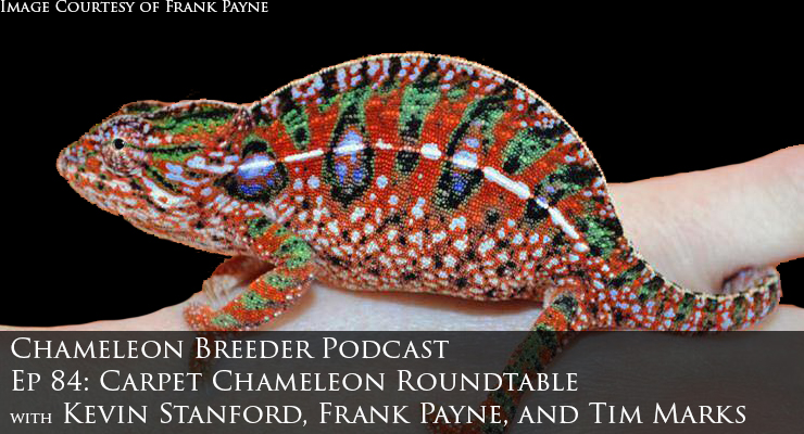 Carpet Chameleon Roundtable
