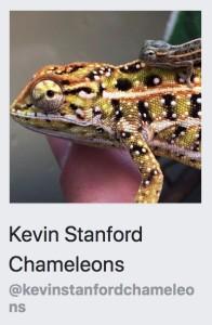 Kevin Stanford Chameleons
