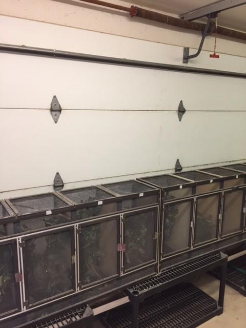 Indoor cages