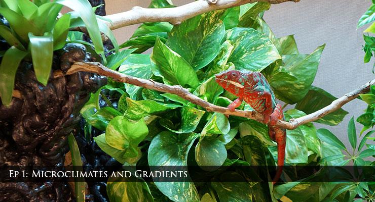 Chameleons and gradients