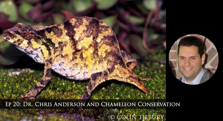 chameleon conservation