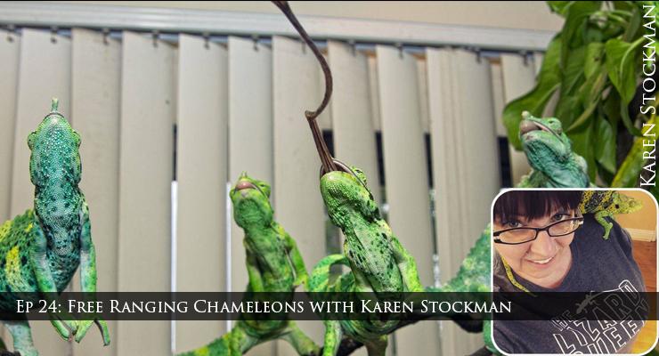 free range chameleons