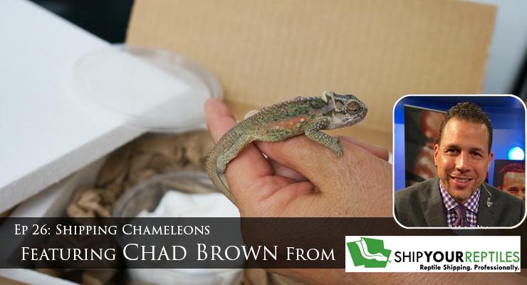 shipping chameleons