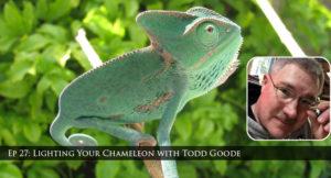 lighting chameleons