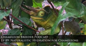 naturalistic hydration for chameleons