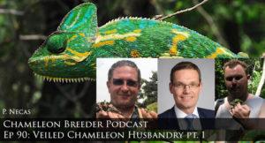 Veiled Chameleon Husbandry part 1