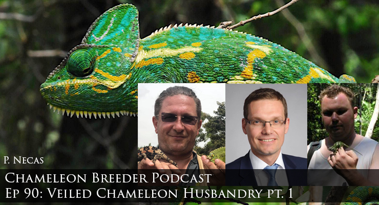 Veiled Chameleon Husbandry part 1