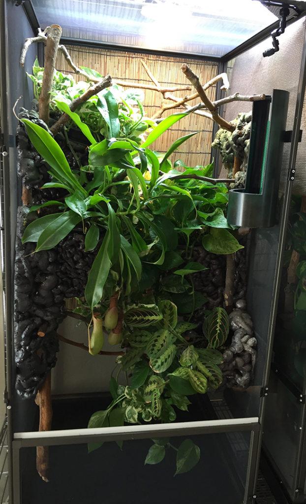 Ep 90 Veiled Chameleon Husbandry Natural Environment Cage Chameleon Breeder Podcast
