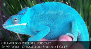 Panther Chameleon Header