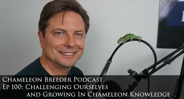 Bill Strand Chameleon Breeder Podcast