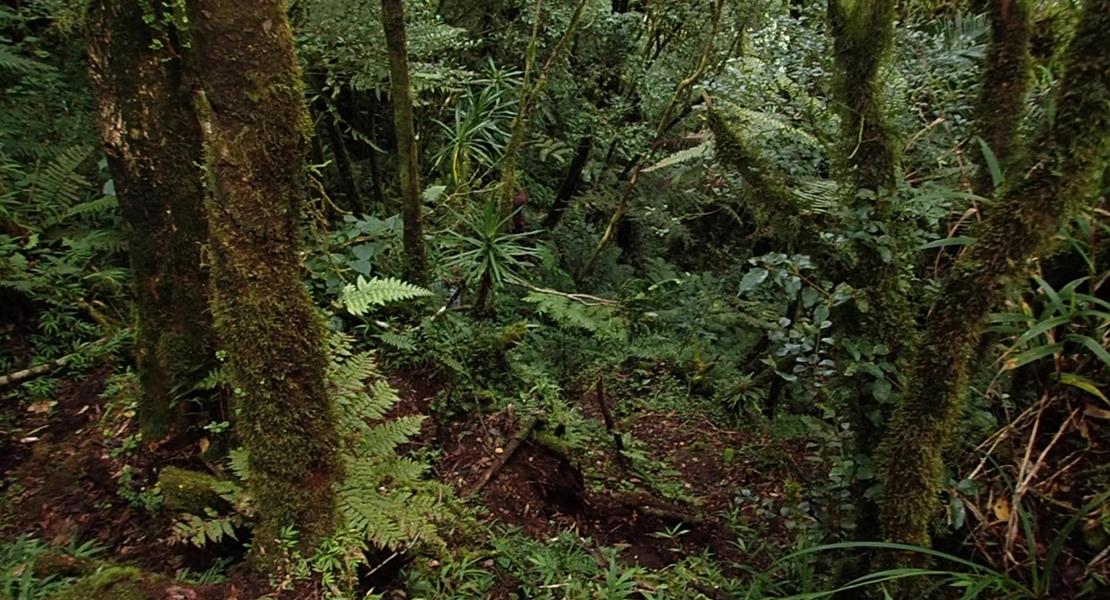 Madagascar forest