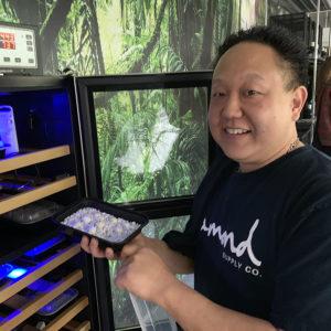 Dale Tamura Meller's Chameleon eggs