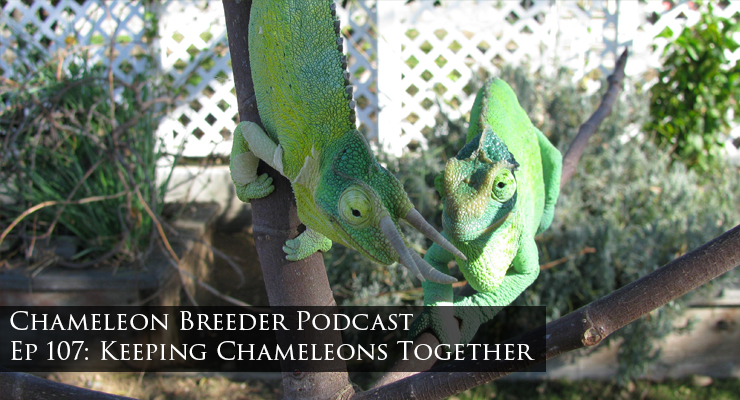 Keeping chameleons together