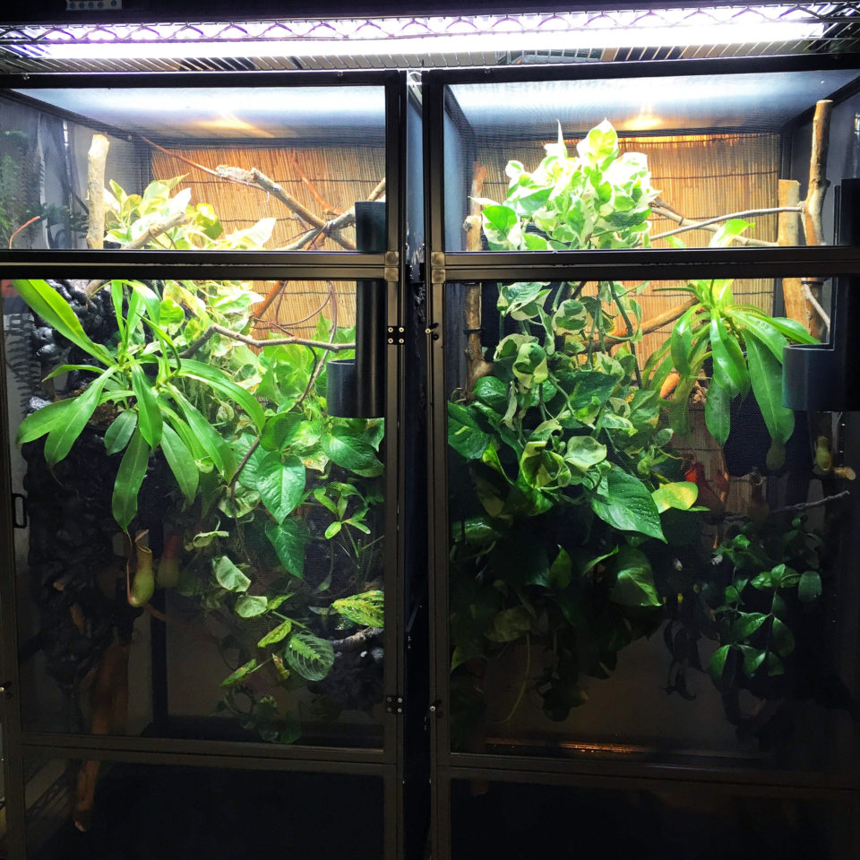 Properly set up Chameleon Cages