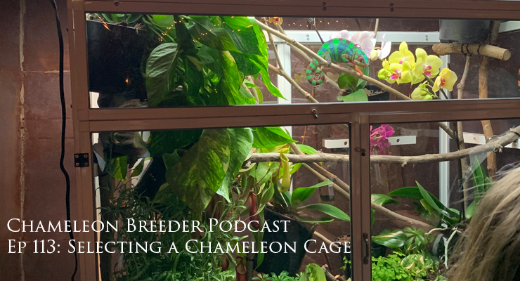 Selecting a chameleon cage
