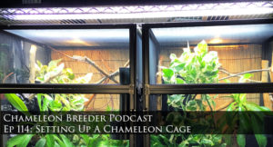 Chameleon Cage set-up