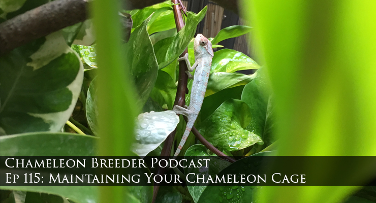 Maintaining Your Chameleon Cage