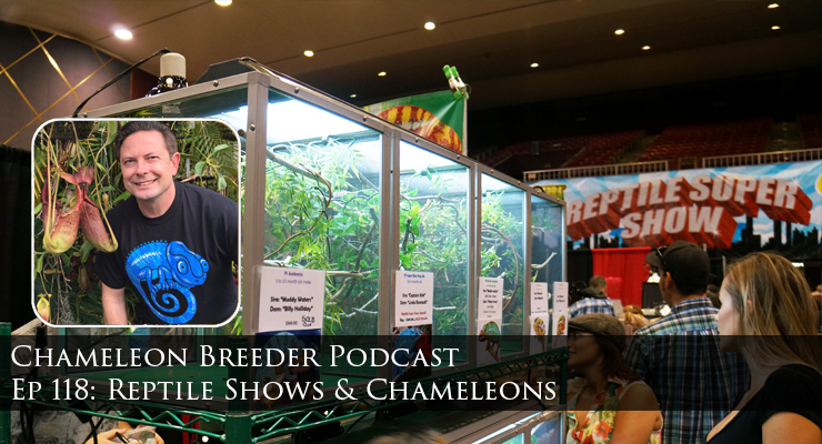 Reptile Shows and Chameleons