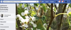 Jacksons Chameleon Community Facebook Group