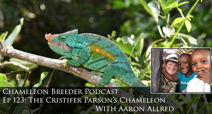 Cristifer Parson's Chameleon